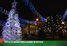 Natale di Luce: tutta la magia degli alberi in terraferma