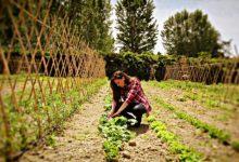 Colture biologiche nel Veneto: nel 2020 aumentate del 25%
