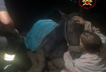 Cavallo rimane impantanato nel fango, salvato a Cavallino Treporti