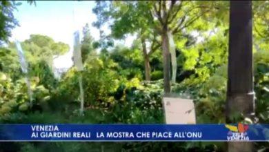 """Venezia: inaugurata la mostra """"Fogli e foglie al vento"""" - TeleVenezia"""