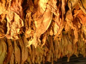 drying-tobacco-1405212-640x480