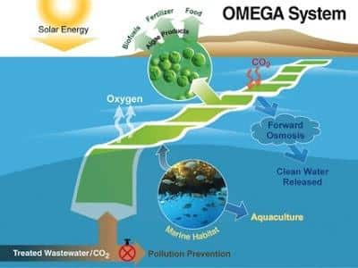 OMEGA-nasa-producir-biocombustible-sostenible