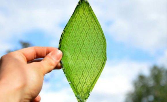 Silk Leaf