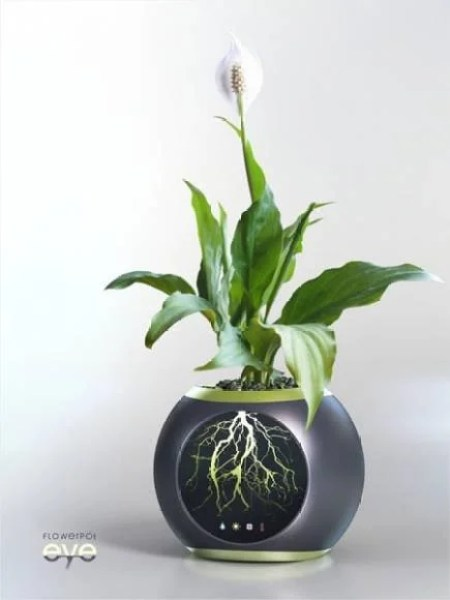 flowerpot-eye-allows-to-see-the-root-system-of-a-plant1