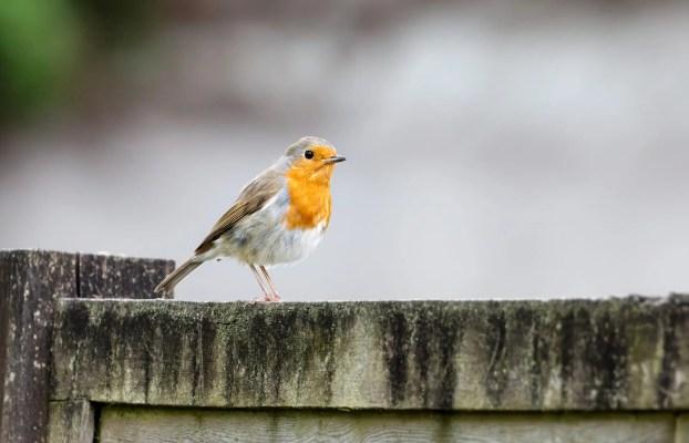 Des oiseaux importants pour le bien-être de l'Homme ?