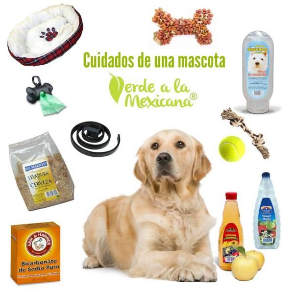 cuidados de una mascota al estilo verde a la mexicana