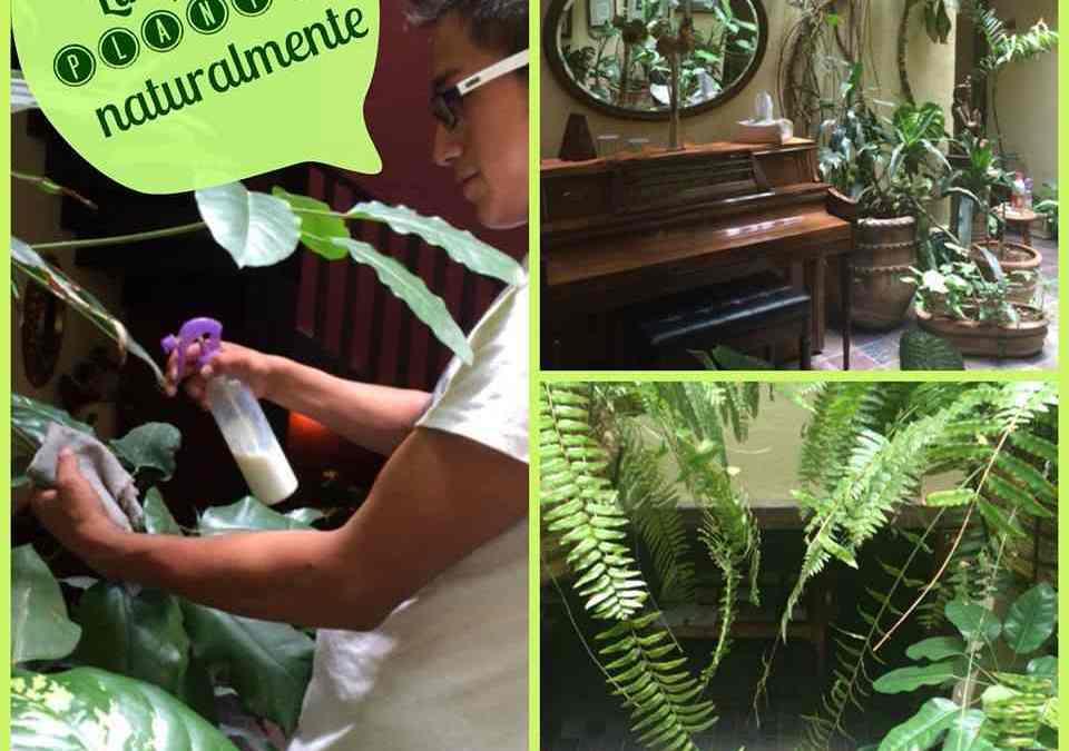 Cómo limpiar las plantas naturalmente