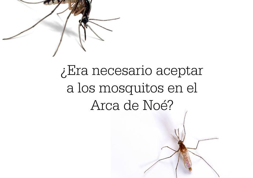 Recetas caseras para hacer repelentes de mosquitos efectivos y sin químicos tóxicos