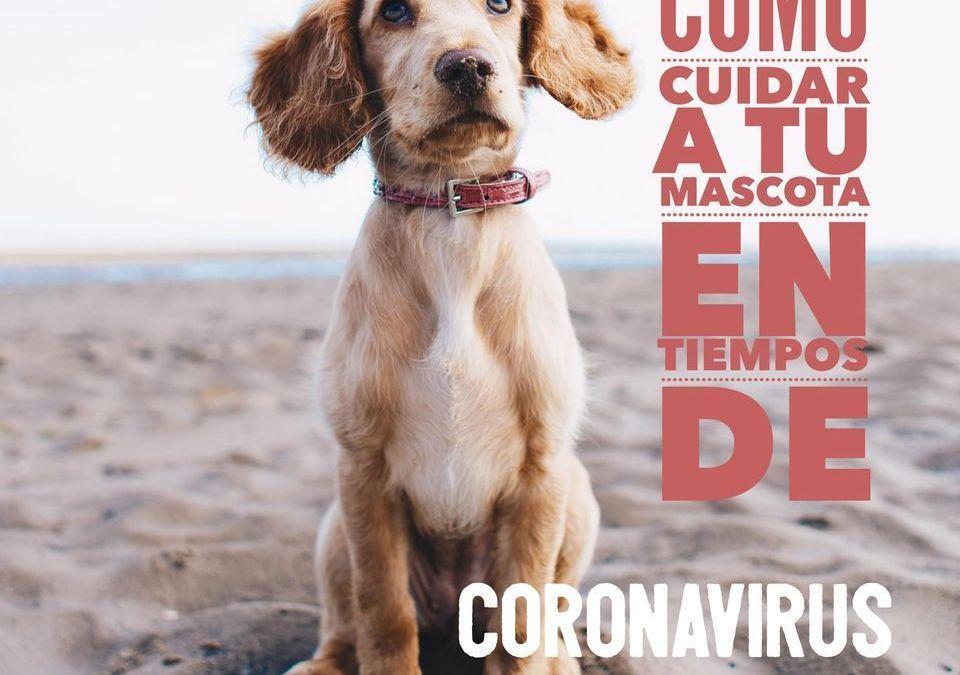 Cuida a tu mascota en tiempos de coronavirus