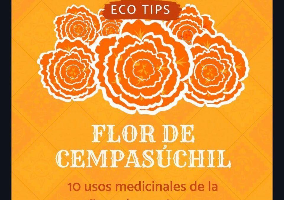 10 usos de la flor más mexicana