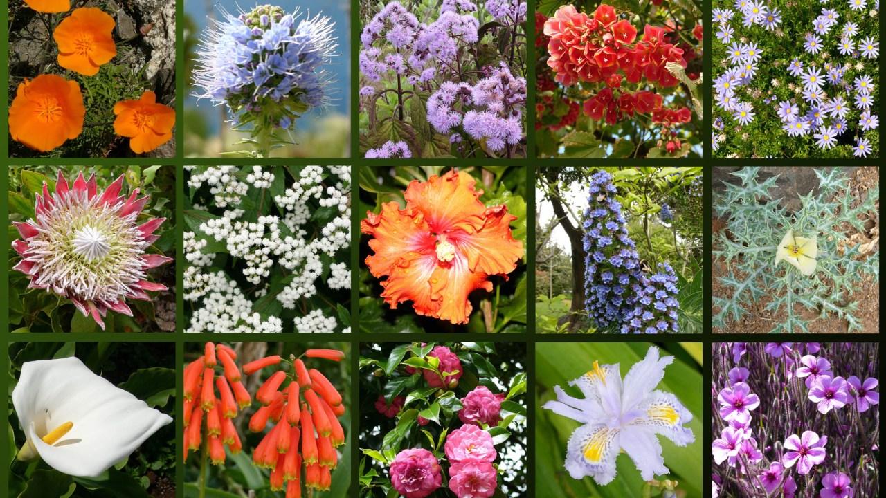 Webs para consultas: jardineria y demás