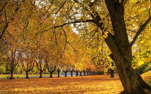 web de Van der Berk: Arboles en otoño