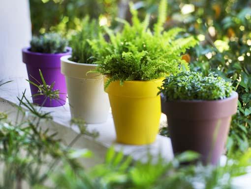 macetas New garden