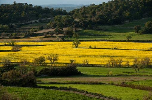 paisaje agrario