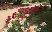Flores Arboreto EMASESA-Camas -Sevilla