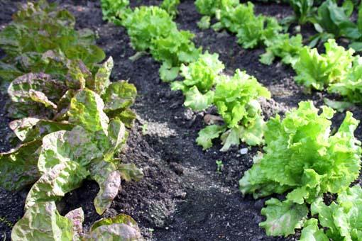 Espacios vivos_jardines comestibles