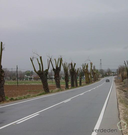 Barbaridades en Jardinería: árboles en carretera