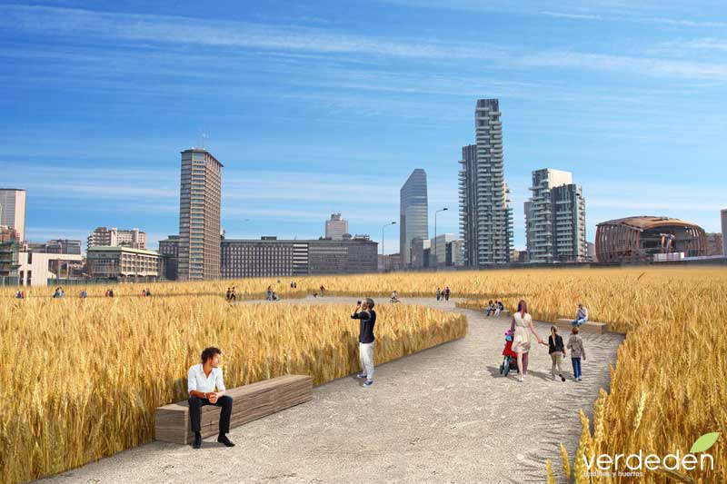 Cultivando en el centro de la ciudad: recreacion wheatfield en Milan