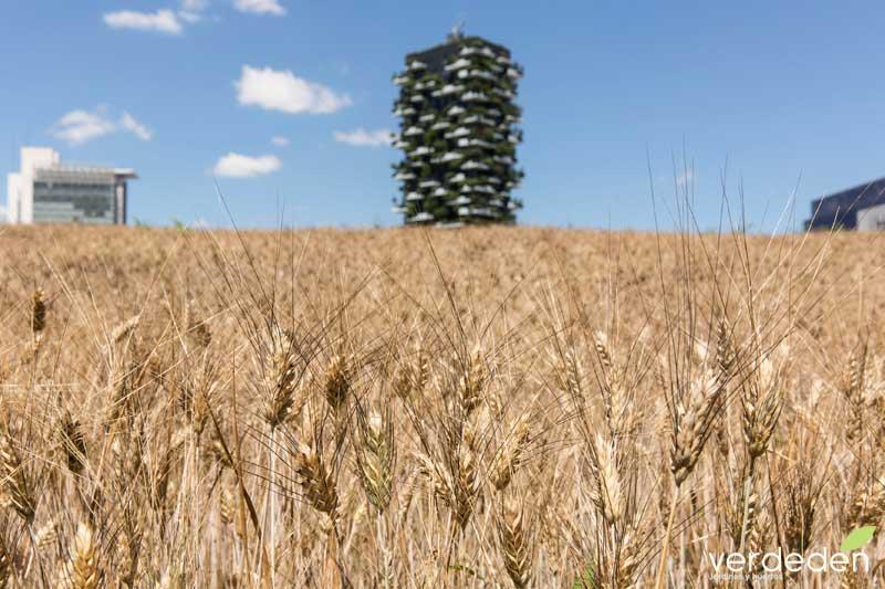 wheatfield Edificio il Bosco Verticale