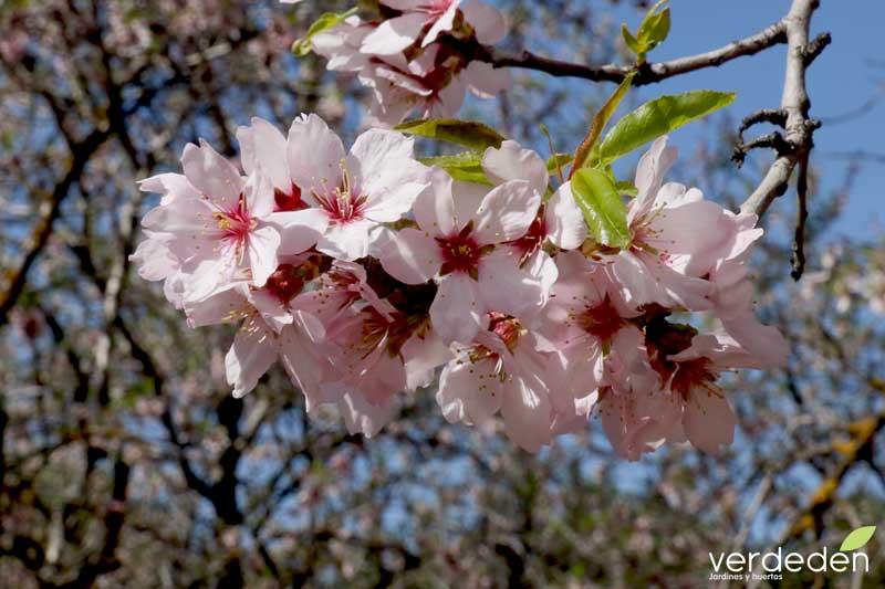 Quinta los molinos_ramillete de flor de almendro