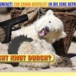 Cute Knut II