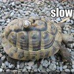 slow²