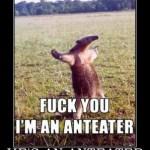 Mein Lieblingstier der Woche: Der Anteater