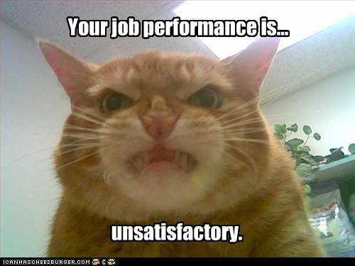 funny-pictures-cat-hates-your-job-performance