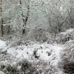 Snow hey-ho
