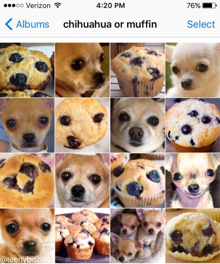 chihuahua-or-muffin-by-karen-zack