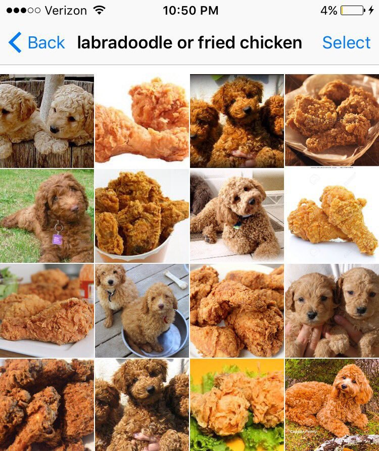 labradoodle-or-fried-chicken-by-karen-zack