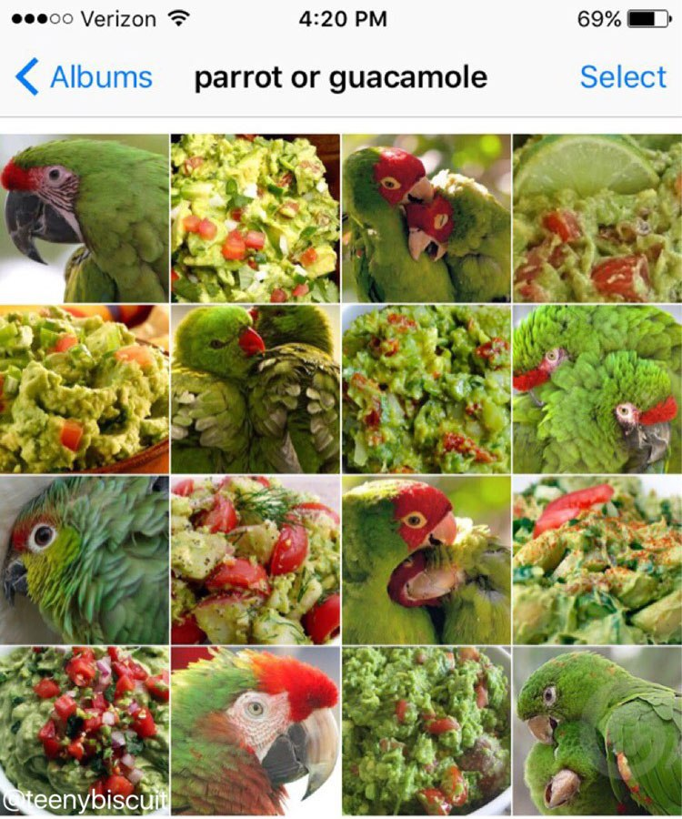 parrot-or-guacamole-by-karen-zack