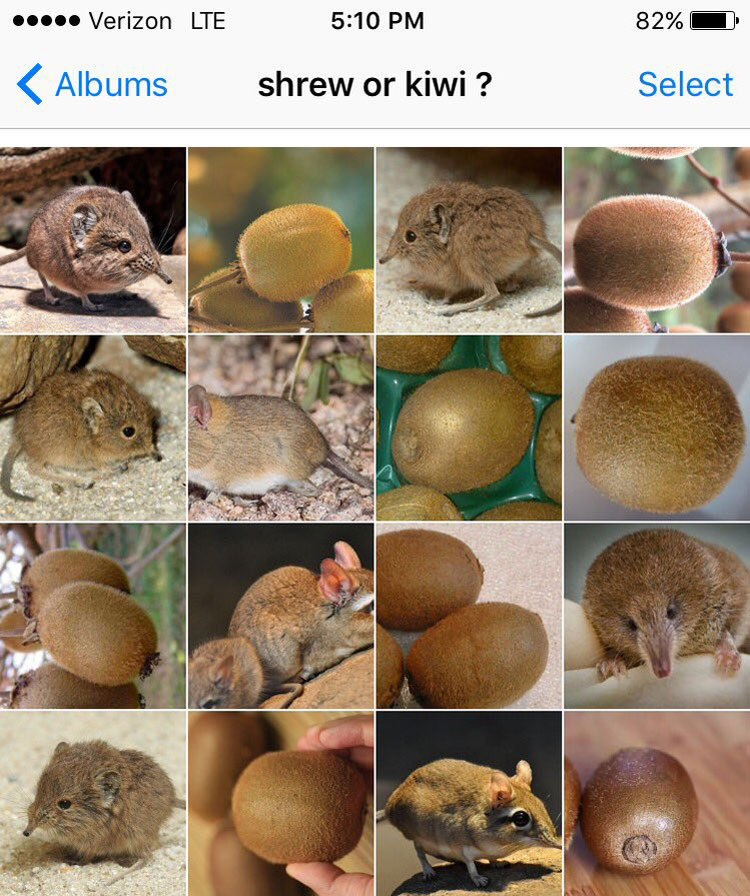 shrew-or-kiwi-by-karen-zack