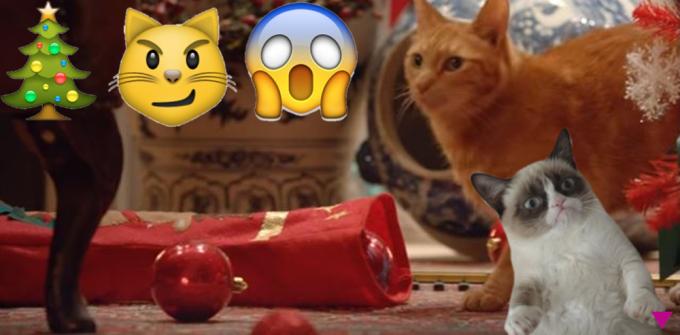 Soon: Katzen vs. Weihnachten