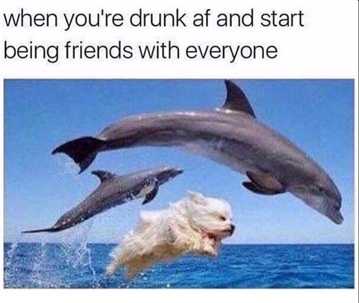 dolphinfriends