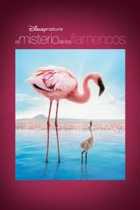 Disneynature: El Misterio de los Flamencos