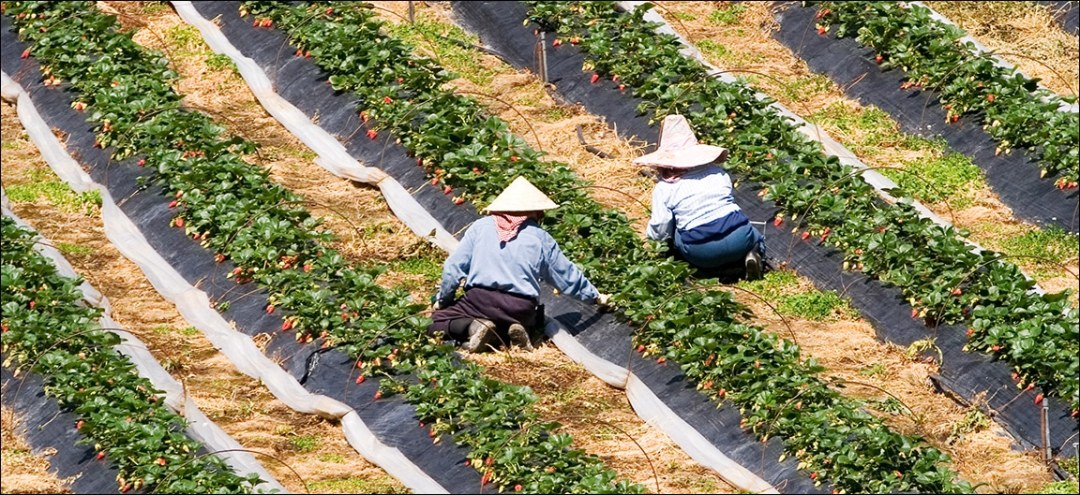 Two Workers at a Flower Farm
