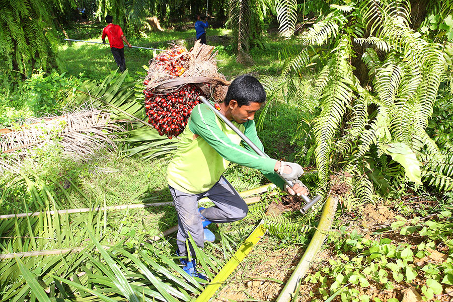Progress in Palm Oil Production? Recent Steps to Advance Labor Rights in the Industry