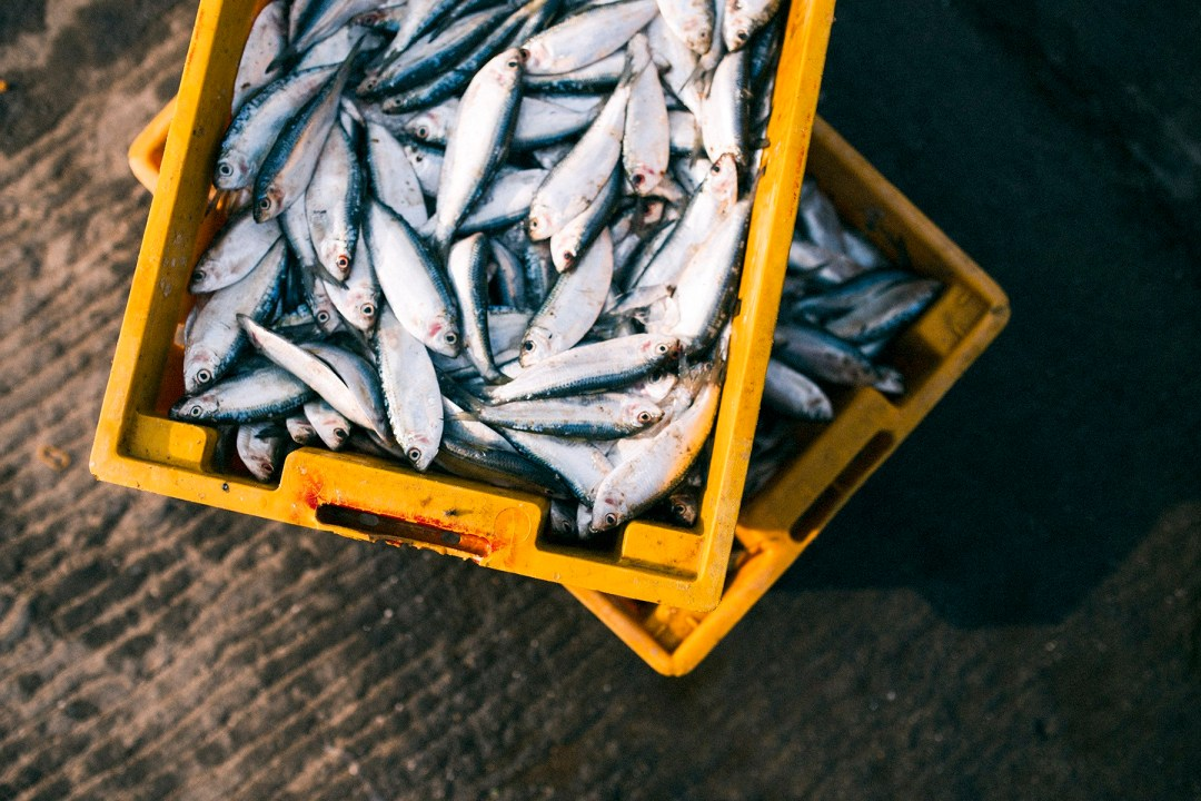 Fish in yellow crates