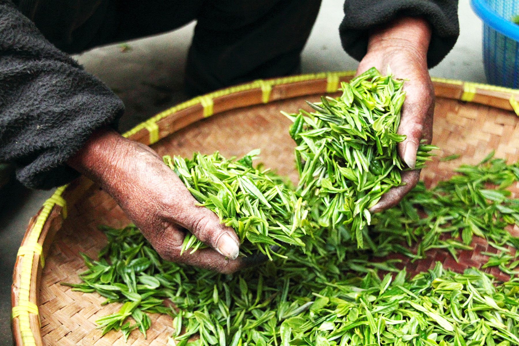 Tea Commodity Atlas Research Page with a Map