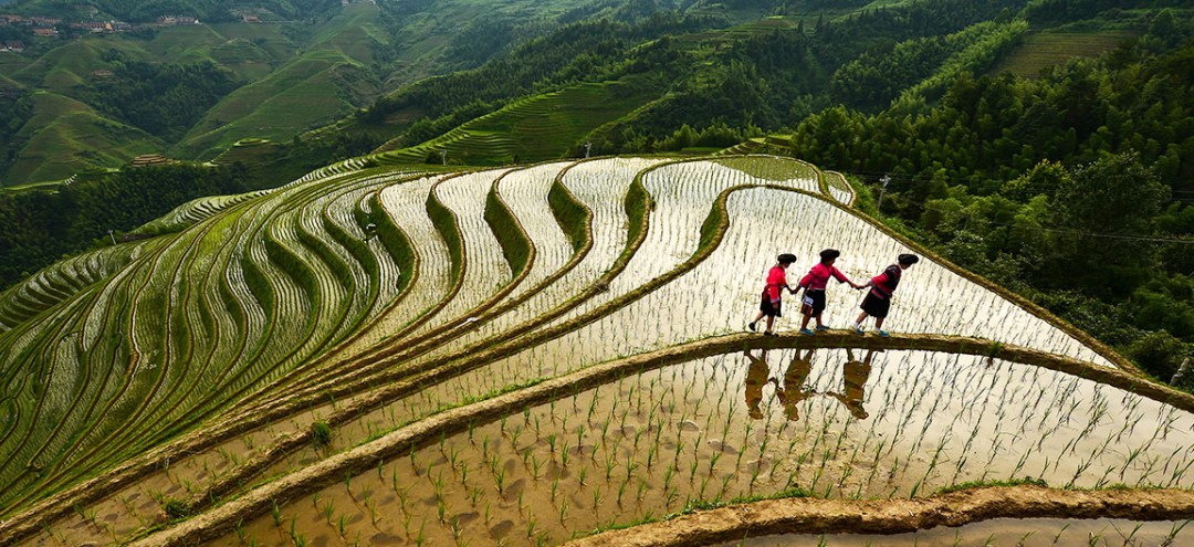 Three people walk across fields in China