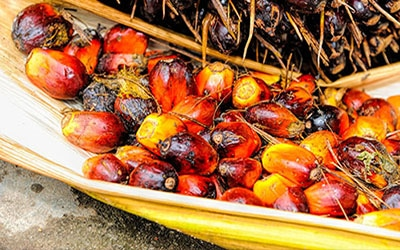Labor and Human Rights Progress in Sustainable Palm Oil Production