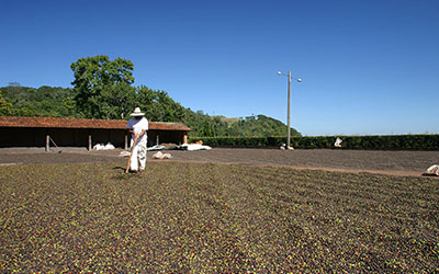 Promoting Ethical Recruitment in the Coffee Sector of Minas Gerais, Brazil