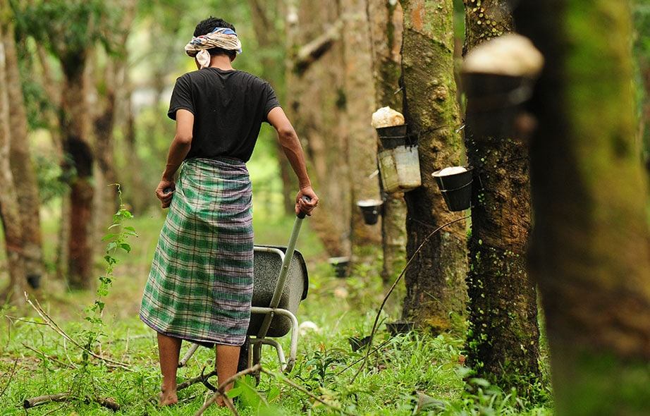 Woman working on rubber plant plantation
