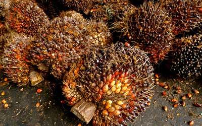 Ecuador-Palm-Oil-Sector-Report-Preview-Image