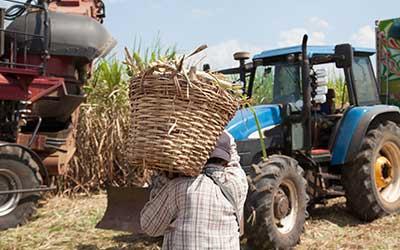 Guatemalan-Sugar-Sector-Report-Preview-Image