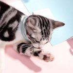 BUYFUN Collier Anti-puces pour Animaux de Compagnie, Anti-Moustique pour Chat, Collier Anti-Insectes pour Animaux de Compagnie, Vermifuge in vitro, pour Chat