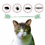 DISANE Lot de 2 Collier Anti-puces 100% Naturel pour chat | 3 mois de protection contre tous les types d'insectes | Collier antiparasitaire formulé sous contrôle vétérinaire