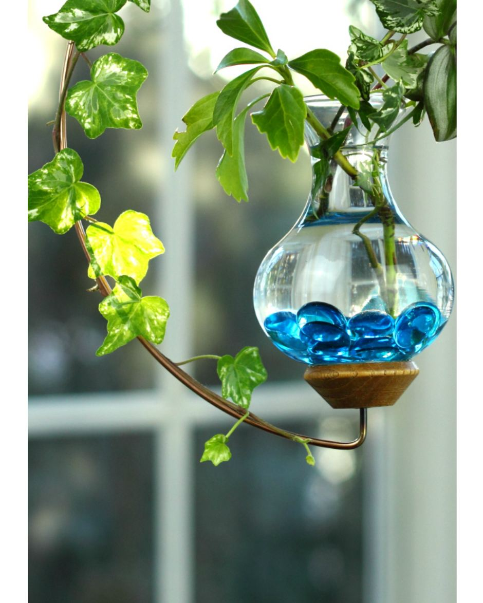 Crescent Hanging Water Garden Live Plants Included Vermont