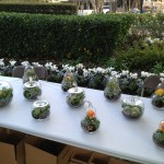 Bonsai Terrariums DesignCraft AIGA Vernon Caldera Market Square
